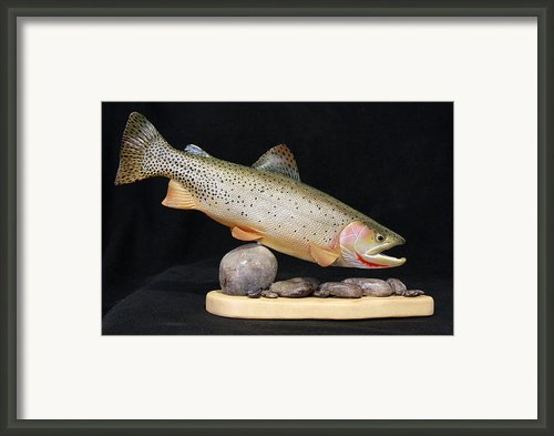 Cutthroat Trout On The Rocks Framed Print By Eric Knowlton