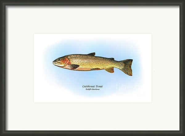 Cutthroat Trout Framed Print By Ralph Martens