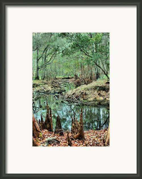 Cypress Knees Framed Print By Kristin Elmquist