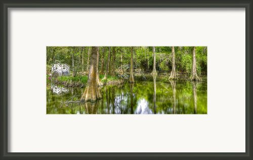Cypress Plantation  Framed Print By Drew Castelhano