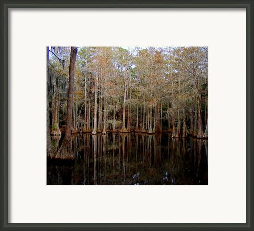 Cypress Pond Framed Print By Lisa Scott