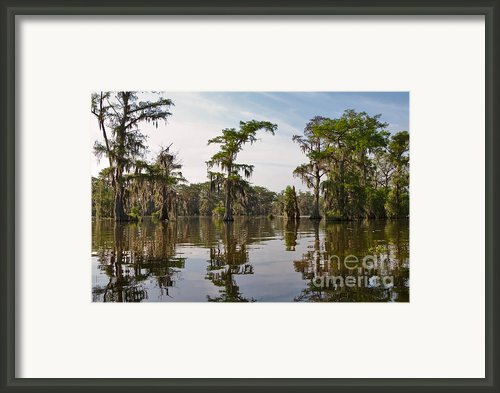 Cypress Trees And Spanish Moss In Lake Martin Framed Print By Louise Heusinkveld