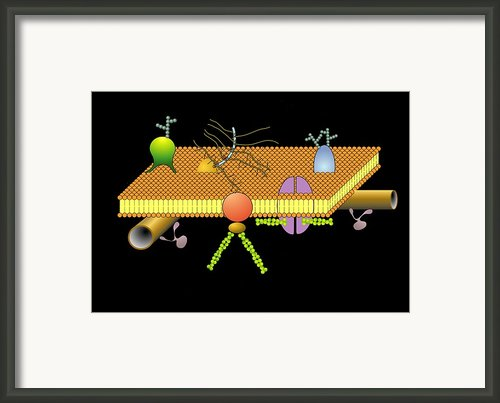Cytoskeleton And Membrane, Artwork Framed Print By Francis Leroy, Biocosmos