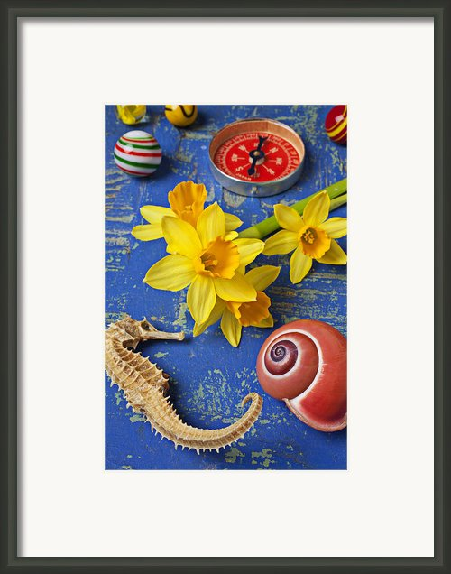 Daffodils And Seahorse Framed Print By Garry Gay