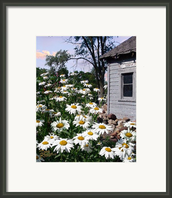 Daises Delight Ii Framed Print By Doug Kreuger