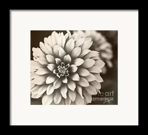 Daliha Dreams Framed Print By Artist And Photographer Laura Wrede