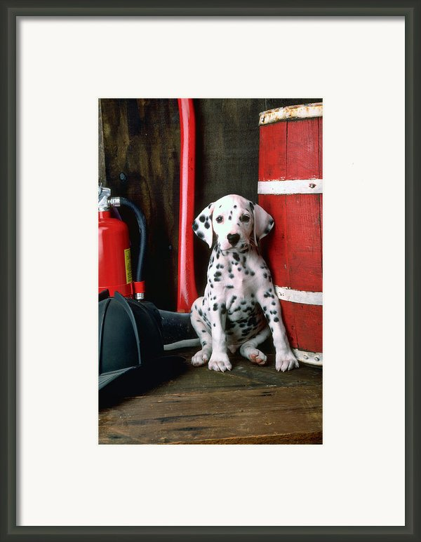 Dalmatian Puppy With Fireman