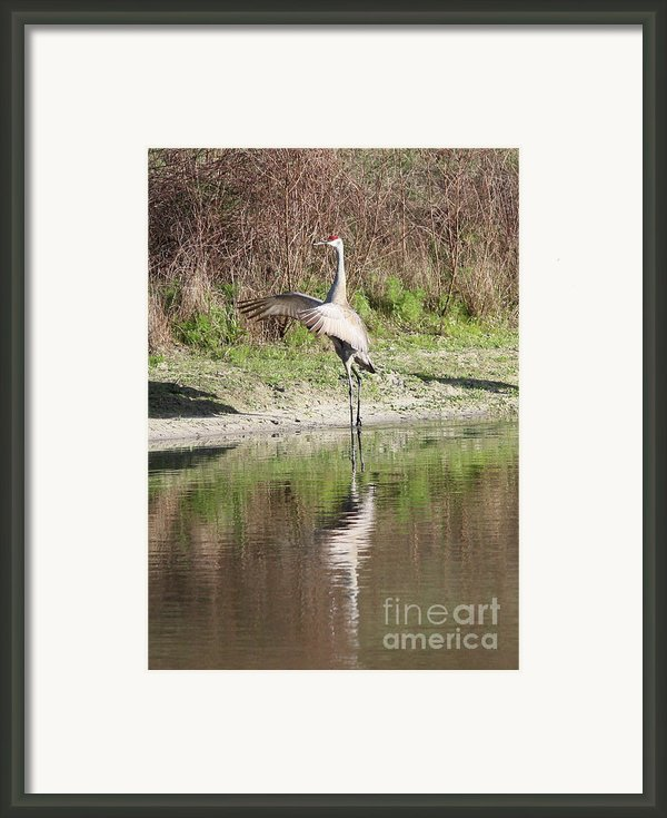 Dancing On The Pond Framed Print By Carol Groenen