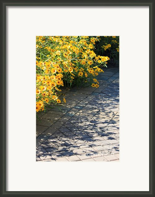 Dappled Light Ii Framed Print By Suzanne Gaff