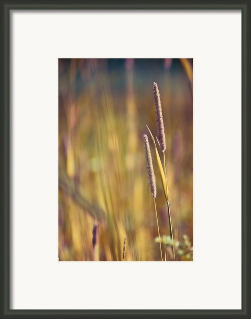 Day Whisperings Framed Print By Aimelle