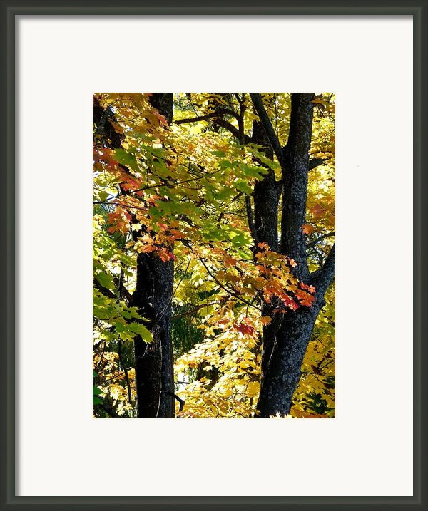 Dazzling Days Of Autumn Framed Print By Will Borden