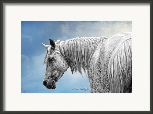 Debbani - The Flea Bitten Mare Framed Print By Karen Slagle