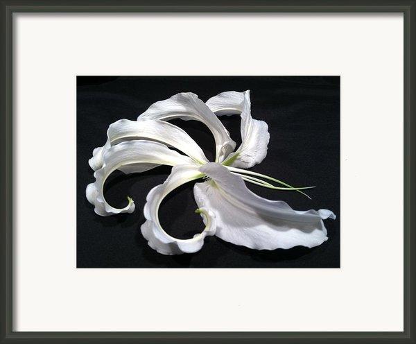 Deconstructed Lily Framed Print By Anna Villarreal Garbis