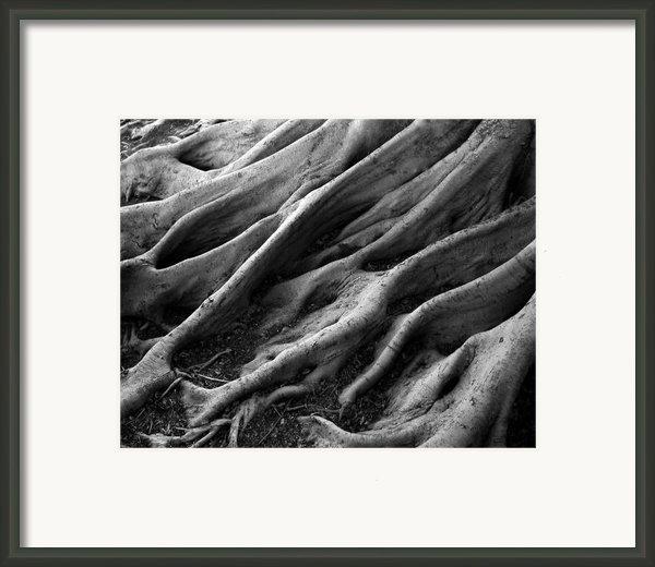 Deep Roots Framed Print By David April