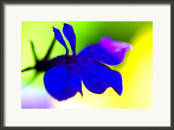 Deeply Blue Framed Print By Marie Jamieson