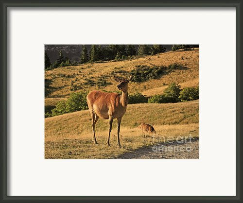 Deer On Mountain 2 Framed Print By Pixel Chimp