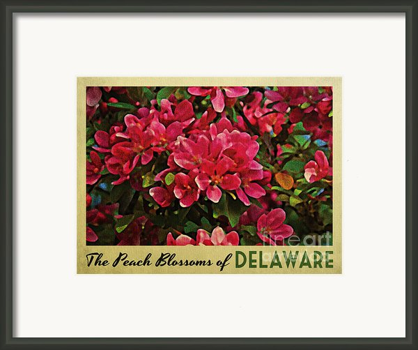 Delaware Peach Blossoms Framed Print By Flo Karp