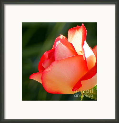 Delicate Beauty Framed Print By Karen Wiles