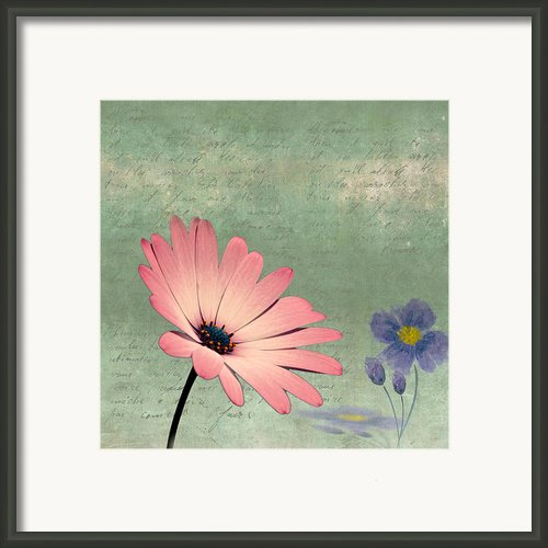 Delicate Flower Framed Print By Ian Barber
