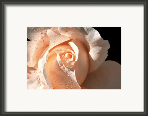 Delicate Peach Colored Rose Framed Print By Tracie Kaska