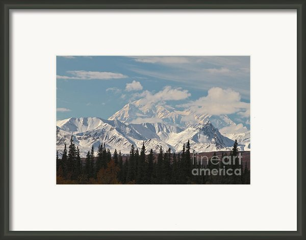Denali In Broad Pass Framed Print By Donna Quante
