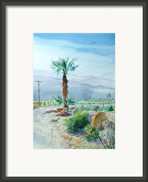 Desert Palm Framed Print By John Norman Stewart