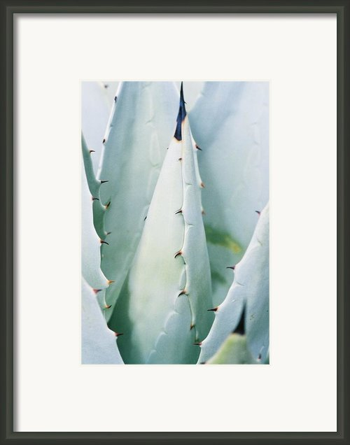 Desert Safety Framed Print By