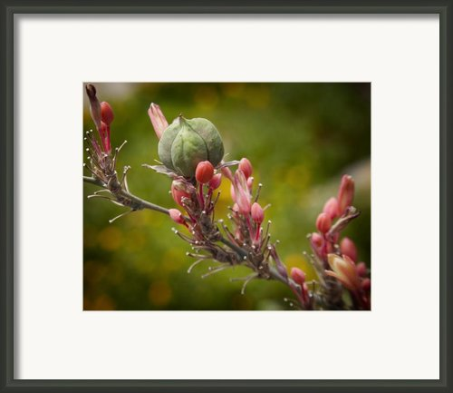 Desert Seed Pod 2 Framed Print By Kelley King