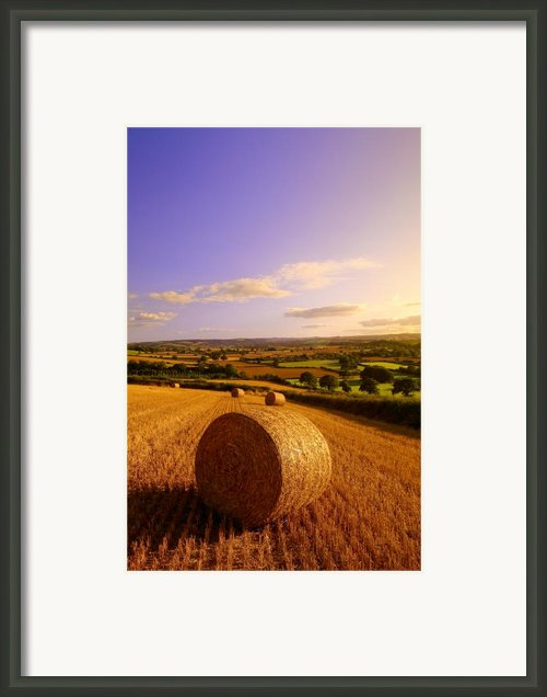 Devon Haybales Framed Print By Neil Buchan-grant