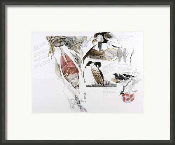 Diagram Of The Effects Of Oil And Oil Framed Print By Jack Unruh