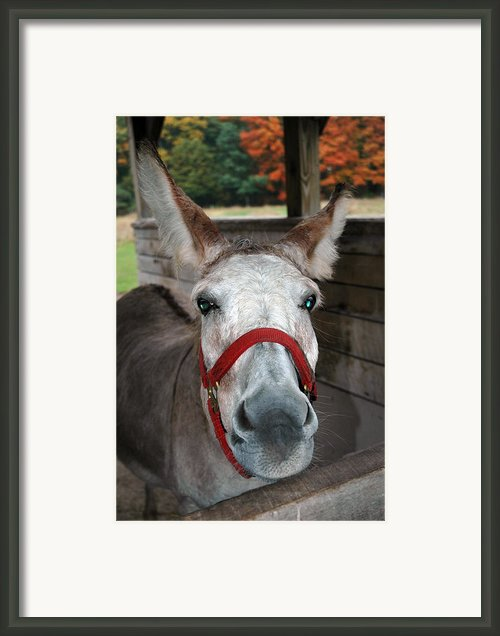 Did You Use The A Word Framed Print By Leeann Mclanegoetz Mclanegoetzstudiollccom