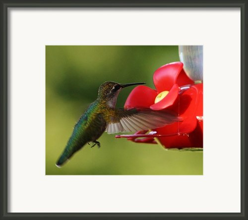 Dinner On The Fly Framed Print By Bruce Bley