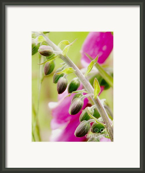 Discussing When To Bloom Framed Print By Rory  Sagner