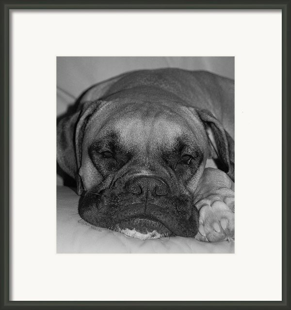 Disturbing His Nap Framed Print By Digiart Diaries By Vicky B Fuller