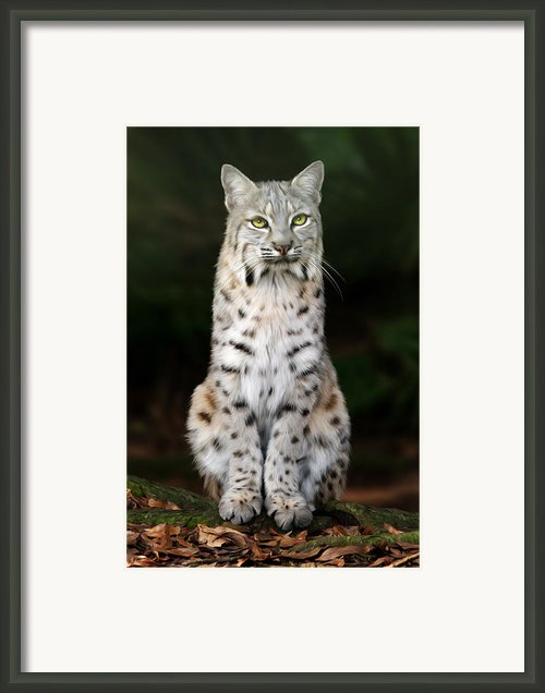 Divinity Framed Print By Big Cat Rescue