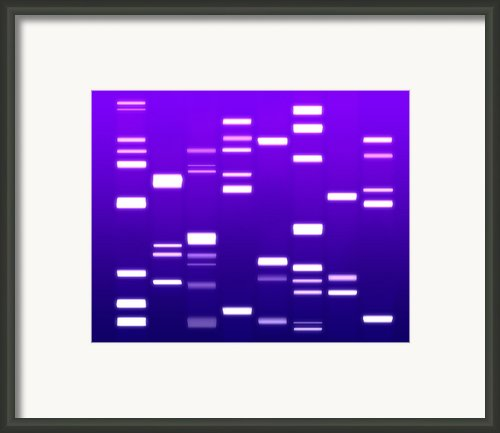 Dna Purple Framed Print By Michael Tompsett