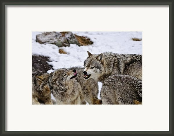 Do I Have Your Attention Now Framed Print By Michael Cummings