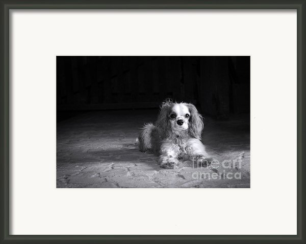Dog Black And White Framed Print By Jane Rix