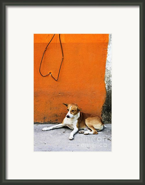 Dog Near Colorful Wall In Mexican Village Framed Print By Elena Elisseeva