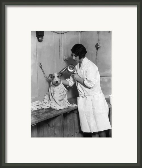 Dog Salon Framed Print By Fox Photos