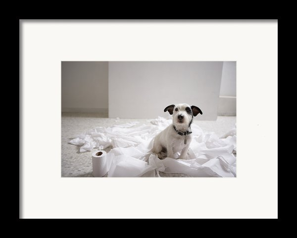 Dog Sitting On Bathroom Floor Amongst Shredded Lavatory Paper Framed Print By Chris Amaral