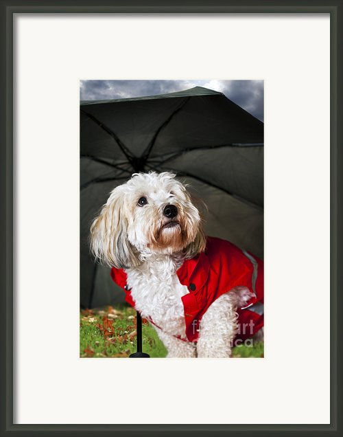 Dog Under Umbrella Framed Print By Elena Elisseeva