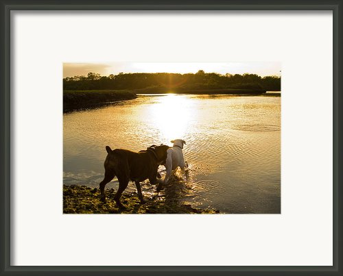 Dogs At Sunset Framed Print By Stephanie Mcdowell