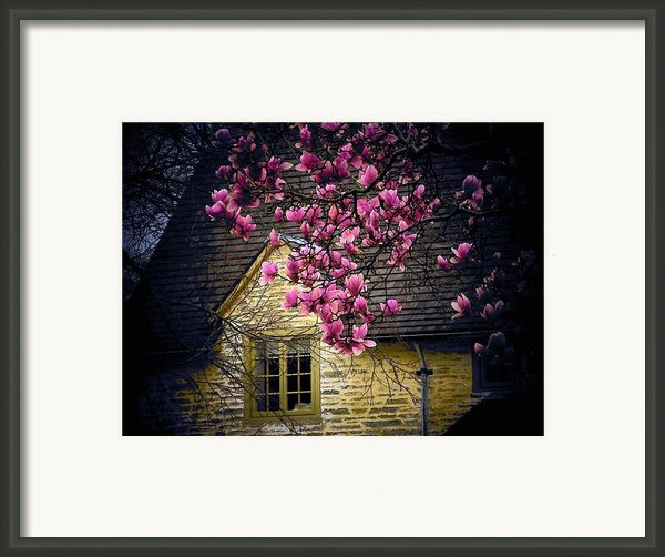 Dogwood By The Window Framed Print By Joyce  Kimble