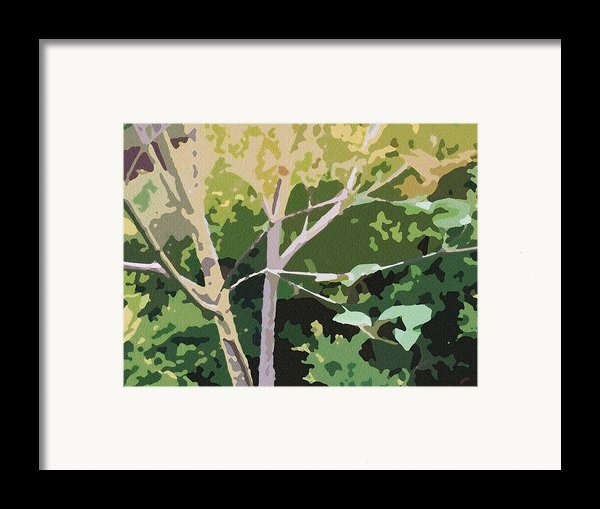 Dogwood I Framed Print By Katharine Birkett
