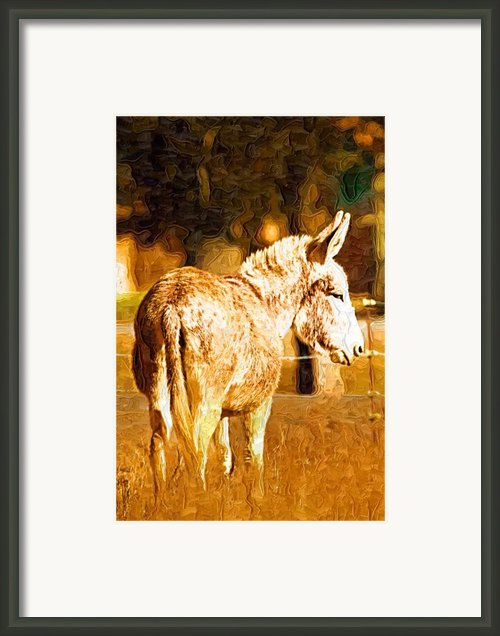Donkey Framed Print By Paul Bartoszek