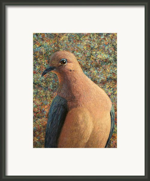 Dove Framed Print By James W Johnson