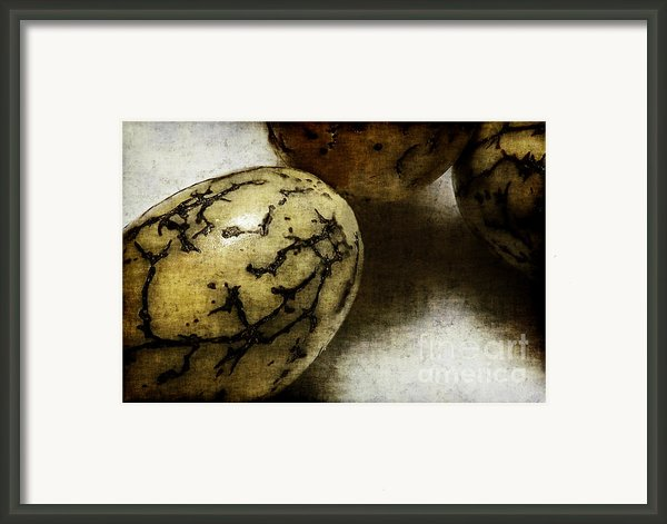 Dragon Eggs Framed Print By Judi Bagwell