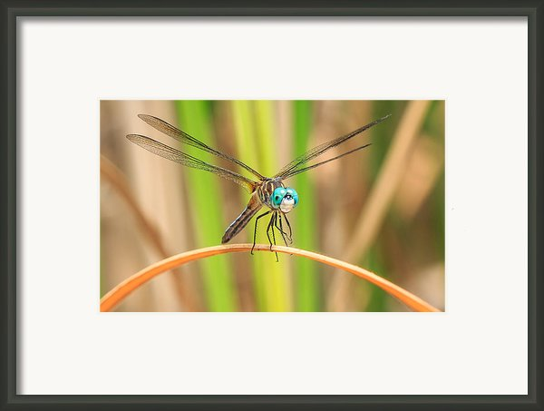 Dragonfly Framed Print By Everet Regal