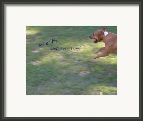 Dream Big And Run Free Framed Print By Sandi Floyd